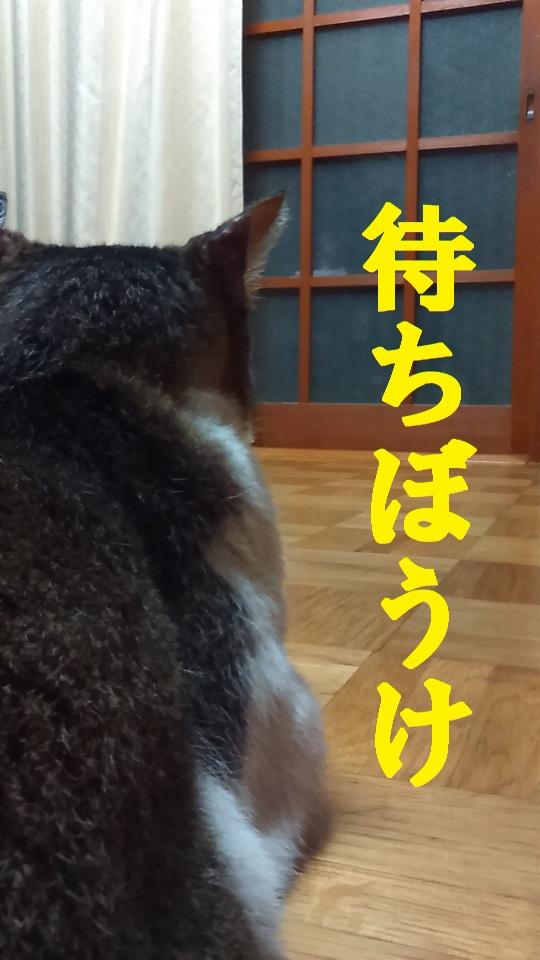 KIMG0569.JPG