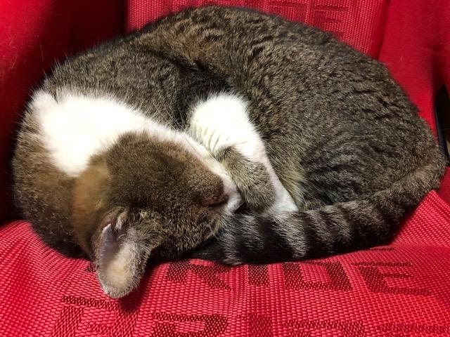 猫はブリッドで丸くなるー