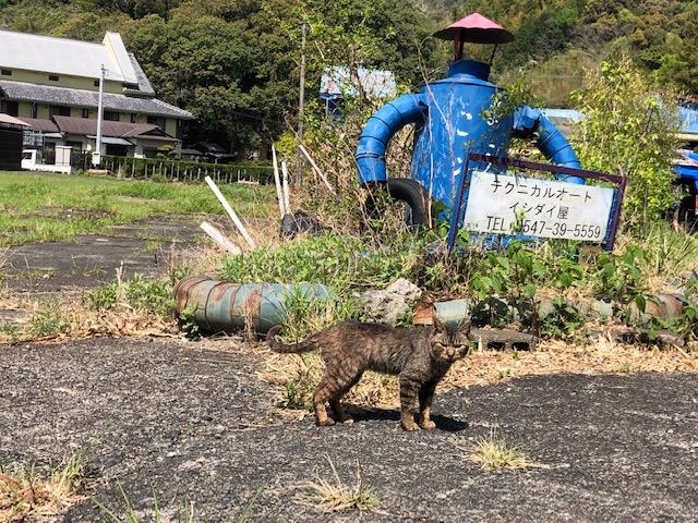 nekoishidaiyakanbanmae202104.jpg