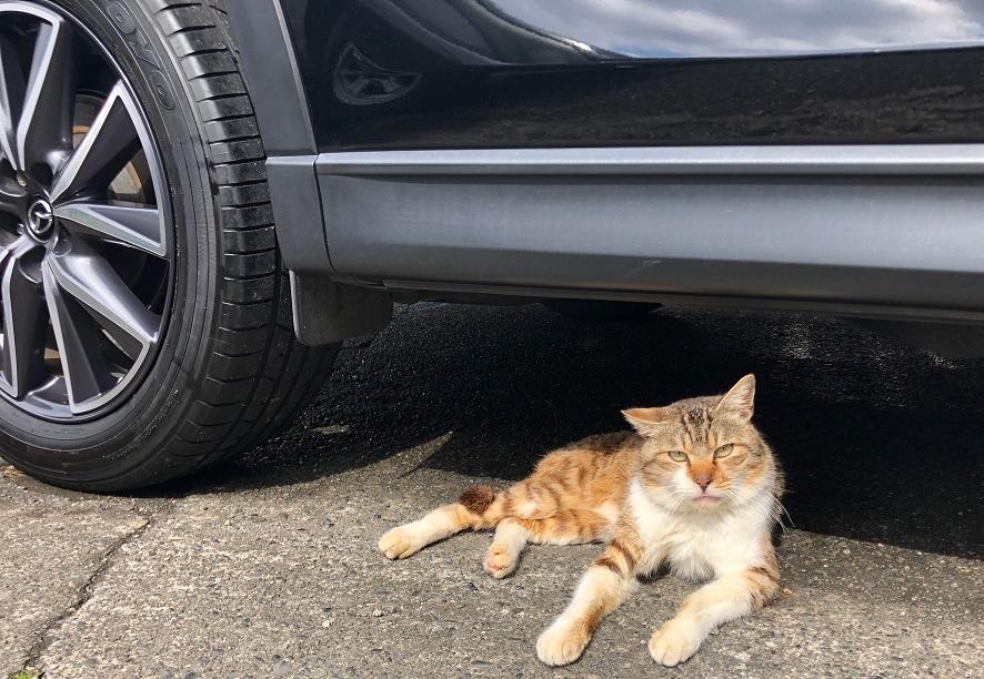 猫、車体見守り